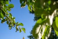 В канун праздника Святой Троицы (Пятидесятницы) митрополит Орловский и Болховский Тихон совершил всенощное бдение в Троице-Васильевском храме Орла. 19 июня 2021 г.